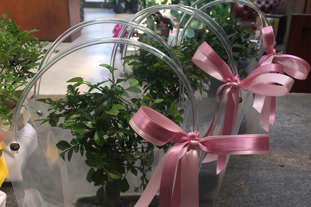 IMG_4372-bomboniere-bonsai